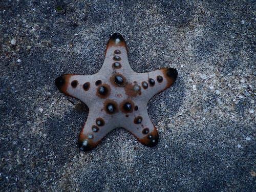 Free stock photo of sea, starfish
