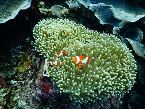 Free stock photo of animals, sea