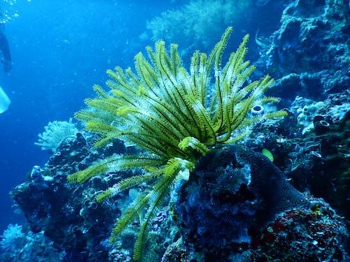 水, 水下, 水中的, 水肺 的 免費圖庫相片
