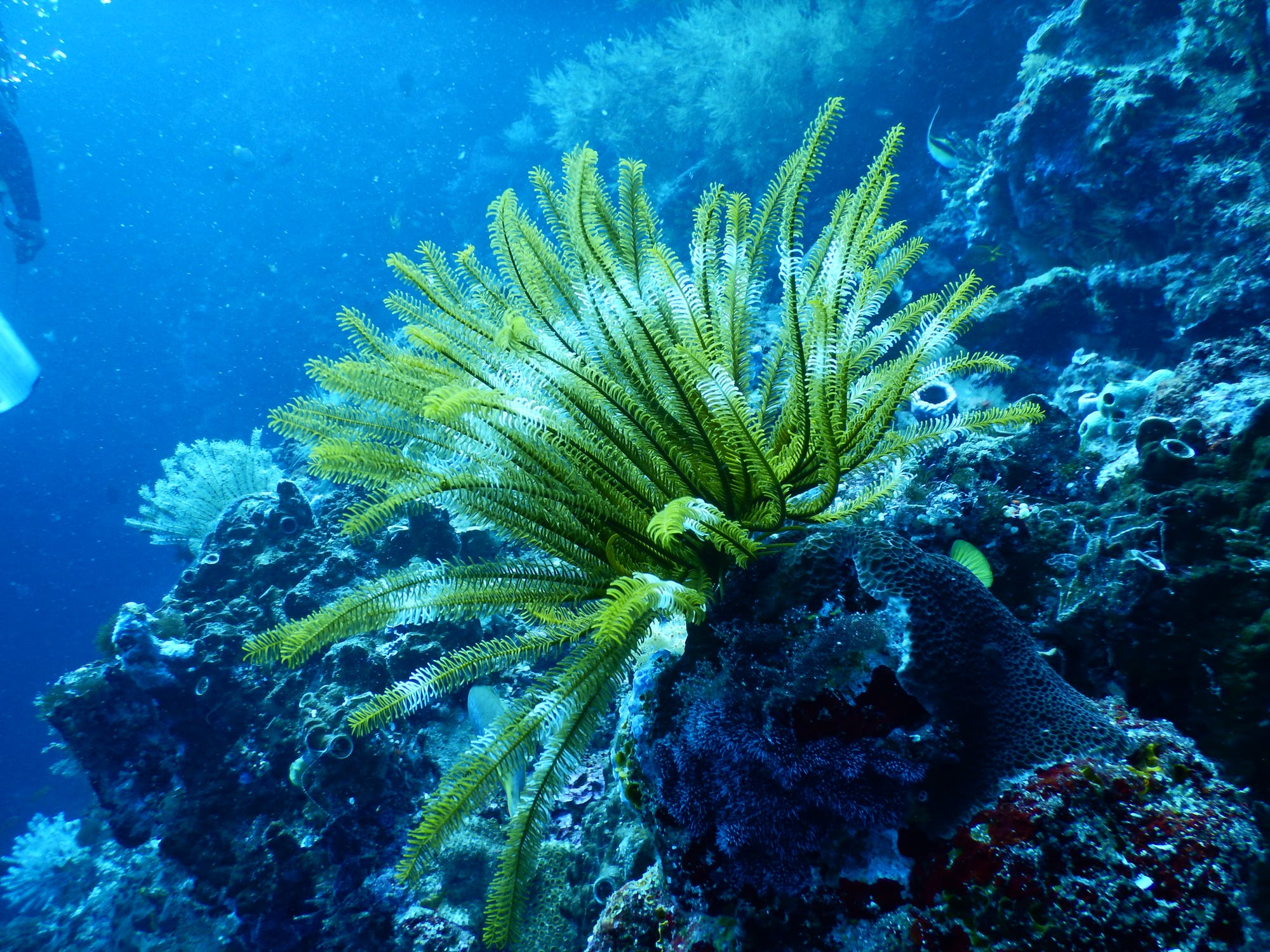 TNC commits $1.6 billion to ocean conservation