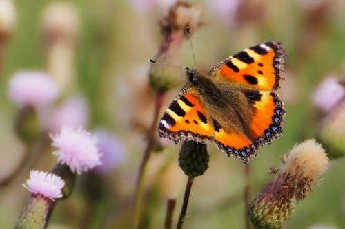 Бесплатное стоковое фото с бабочка, максросъемка, насекомое, природа