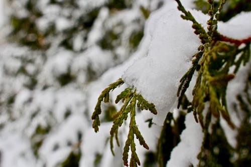 Free stock photo of branch, christmas, cold