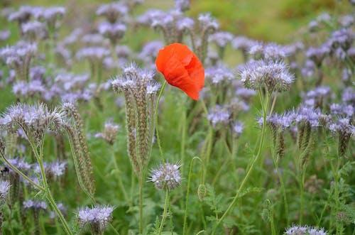 bitki örtüsü, bitkiler, çiçek, Çiçekler içeren Ücretsiz stok fotoğraf