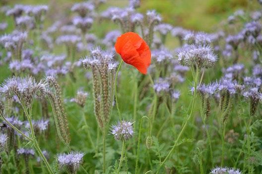 Orange Petaled Flower over Green Grass