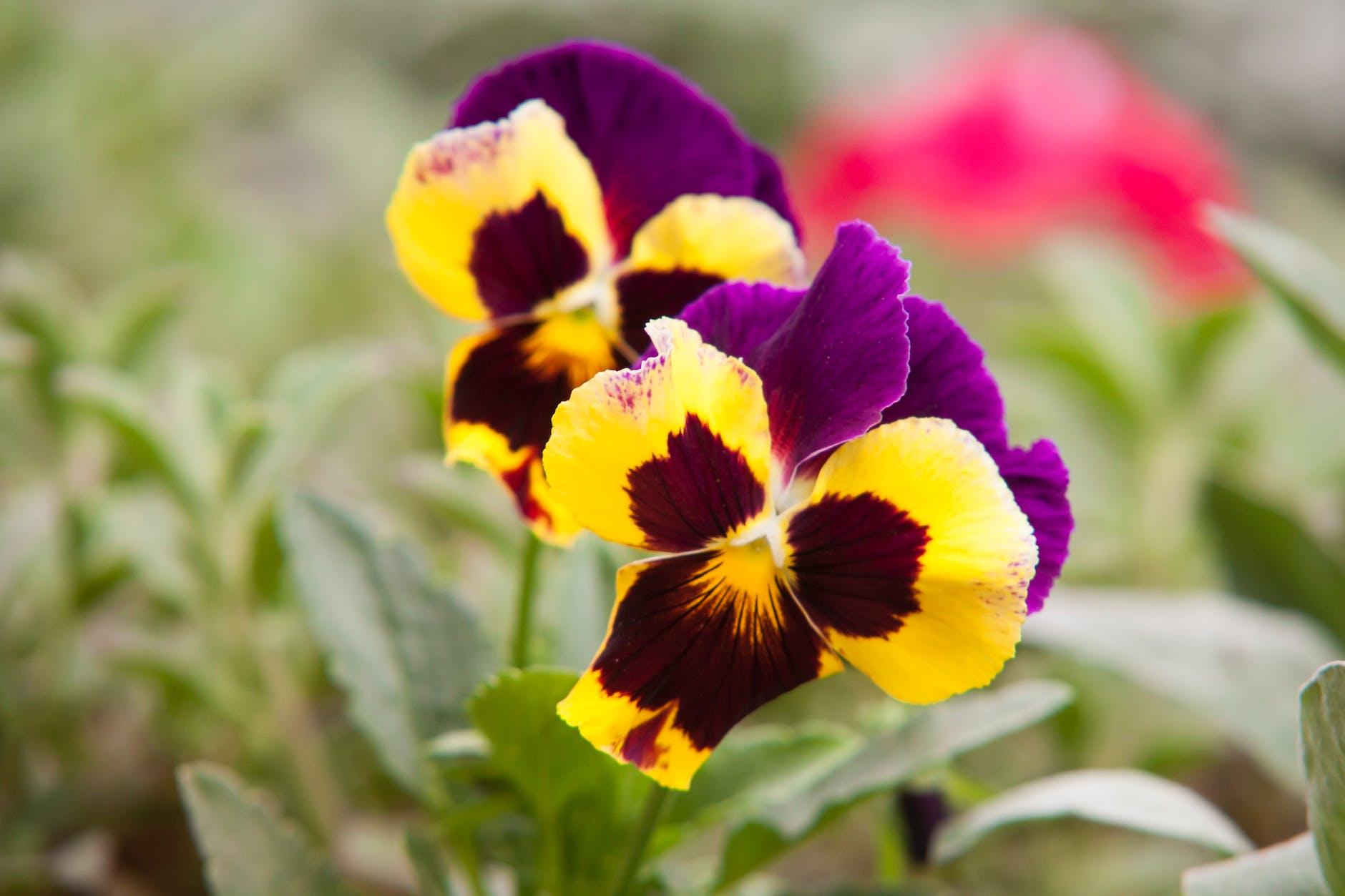 Обери горщик для квітки правильно
