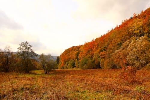 Kostenloses Stock Foto zu bäume, dämmerung, gras, himmel