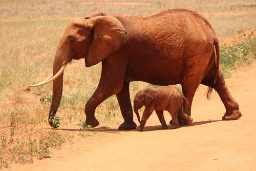 1 Elephant Beside on Baby Elephant