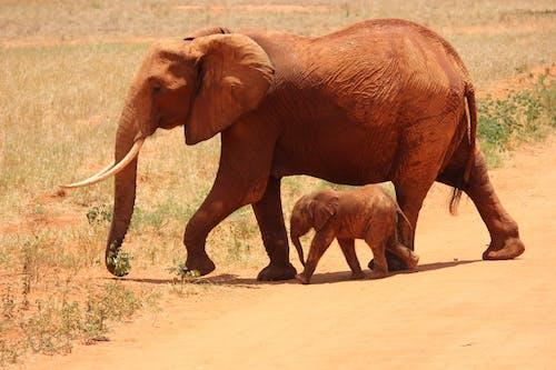 Бесплатное стоковое фото с дикая природа, дикие животные, животные, саванна