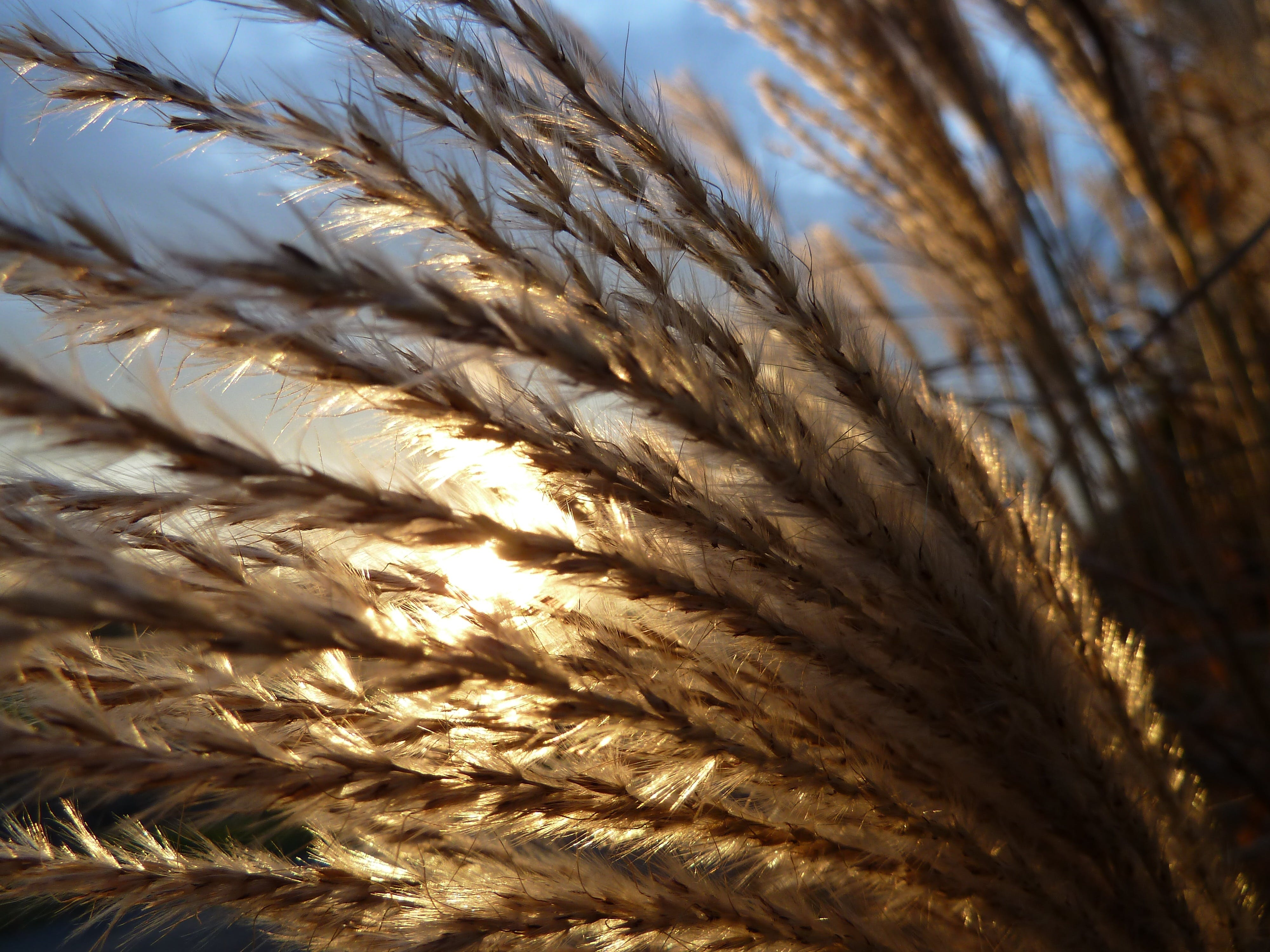 Brown Grass Plant during Daytime