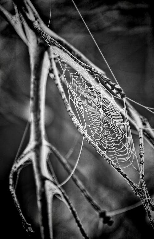 Základová fotografie zdarma na téma černobílý, makro, pavoučí síť, pavučina