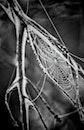 black-and-white, macro, cobweb