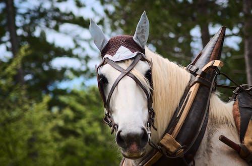 Бесплатное стоковое фото с белая лошадь, голова, деревья, животное