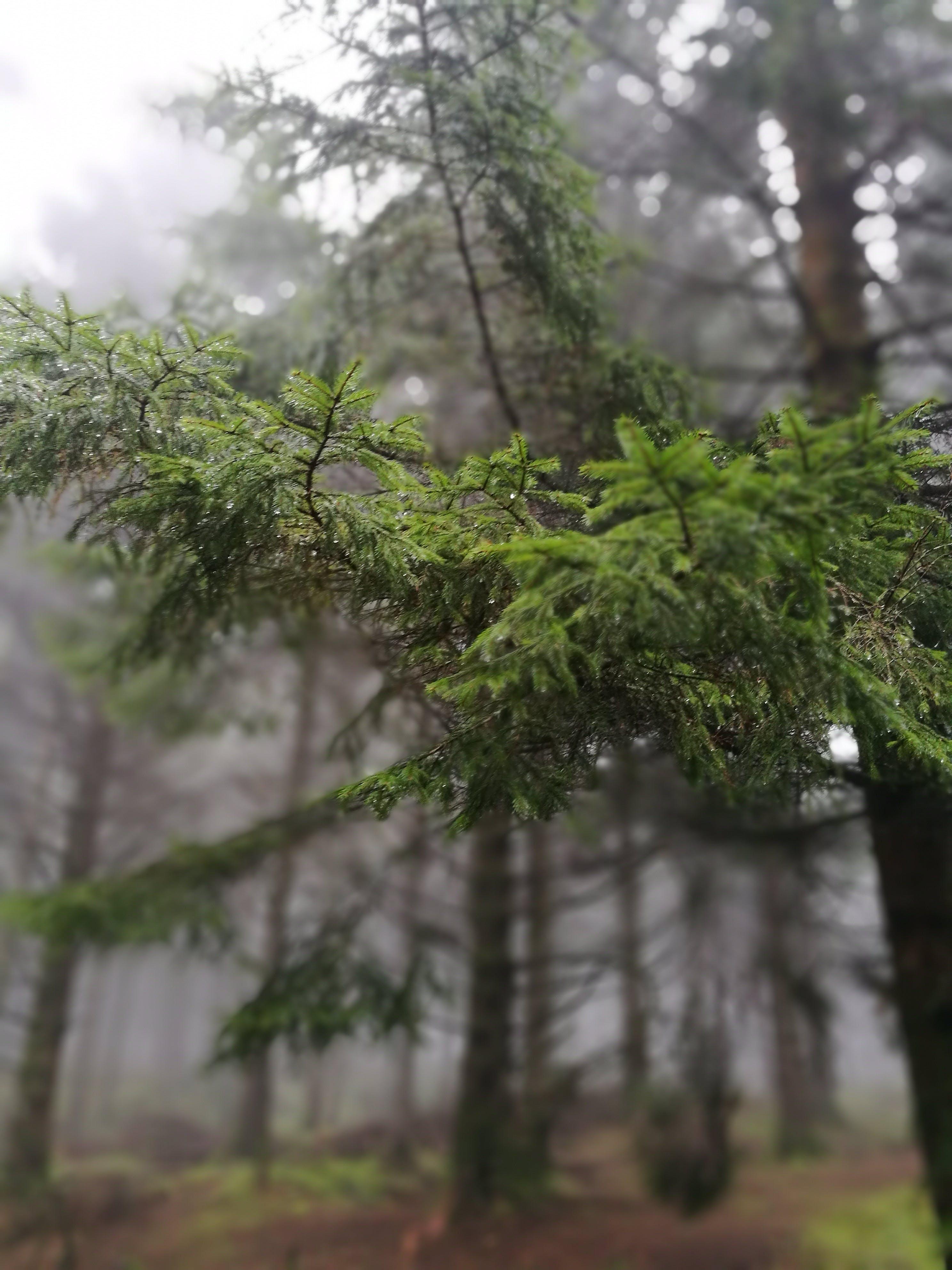 Základová fotografie zdarma na téma lesnatý kraj, stromy, větve, zamlžené
