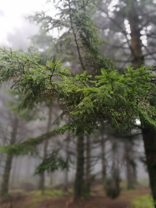 Free stock photo of branches, misty, trees, woodland