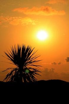 Free stock photo of sunset, beach, evening, palm