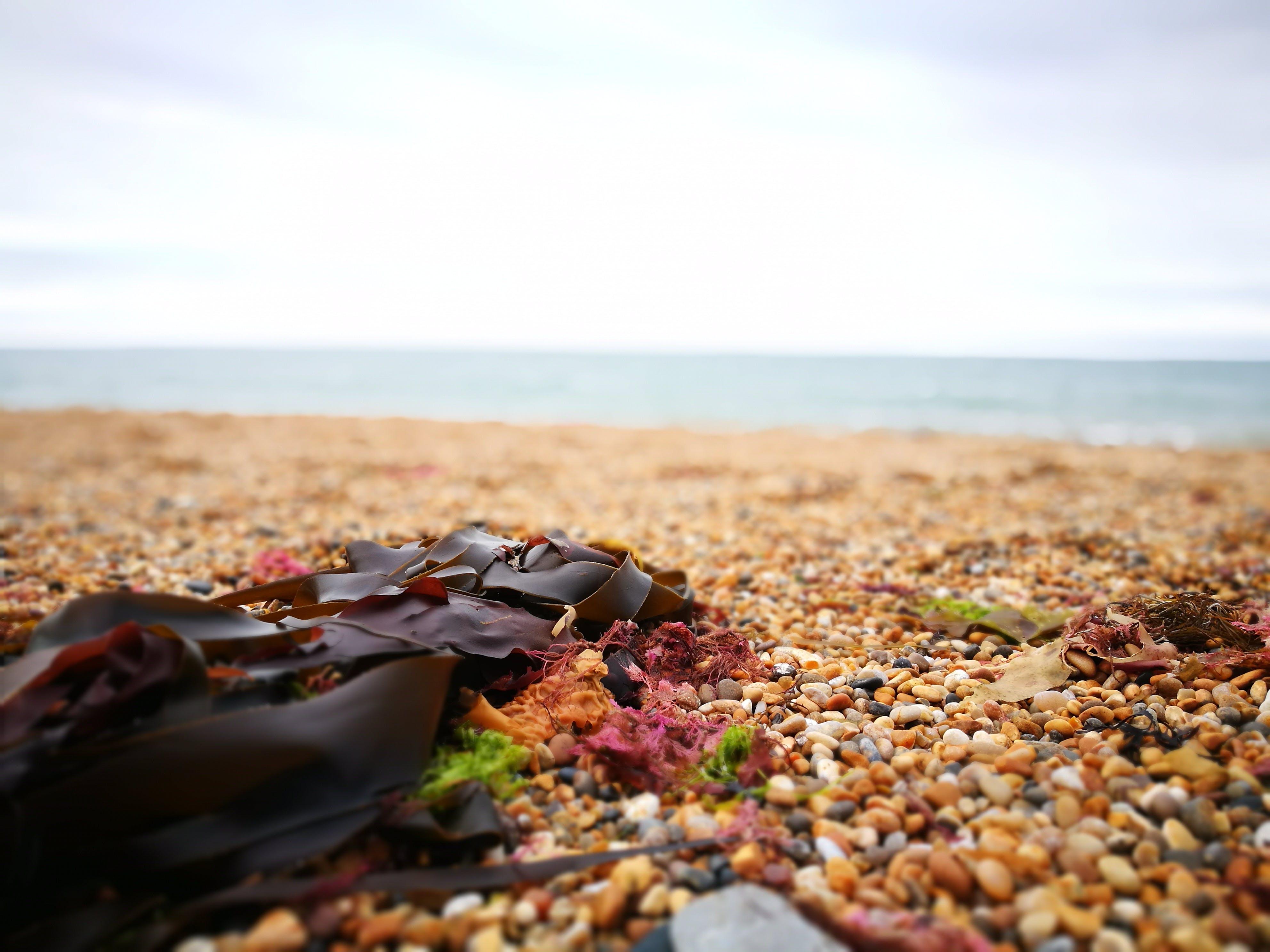 Gratis lagerfoto af småsten, stenstrand, strand