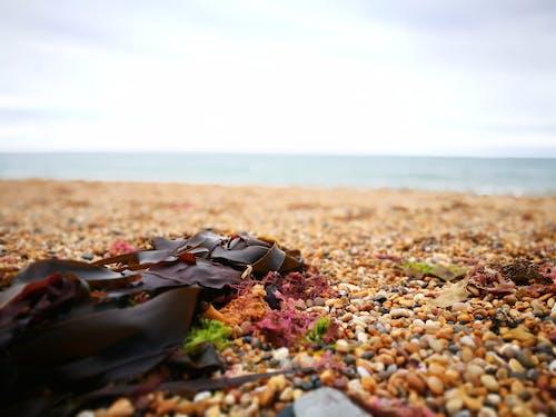 卵石, 海灘, 海邊, 石頭海灘 的 免费素材照片