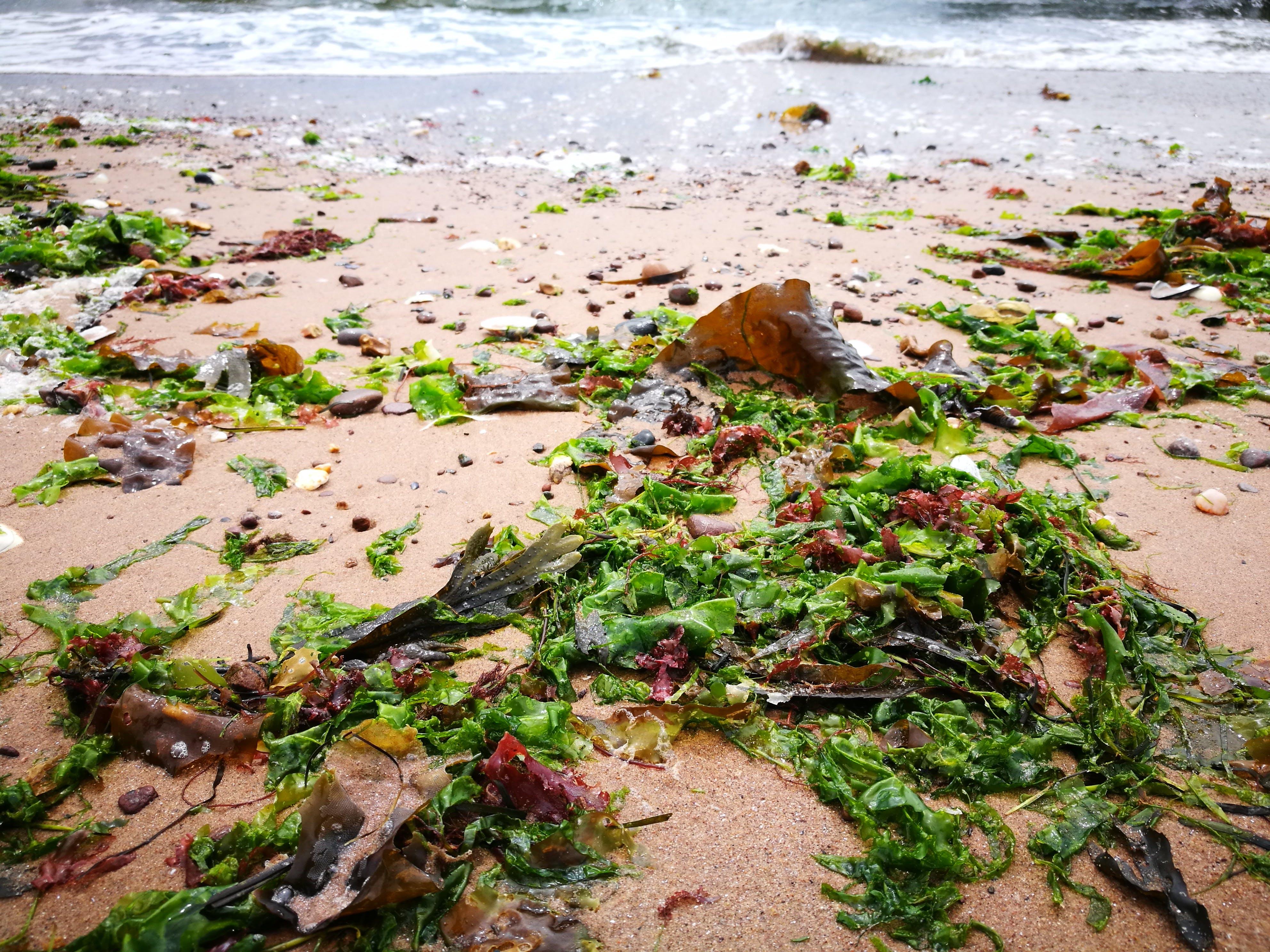 Základová fotografie zdarma na téma mávání, pláž