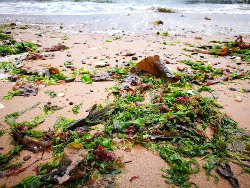 손을 흔들다, 해변의 무료 스톡 사진