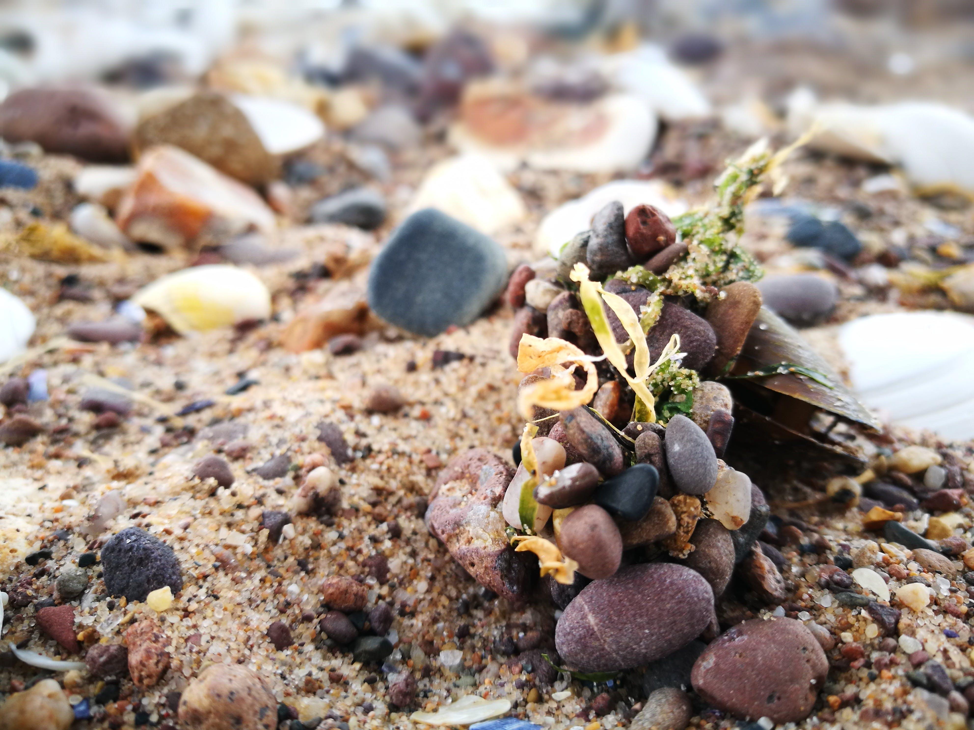 Základová fotografie zdarma na téma oblázková pláž, oblázky, písek, pláž