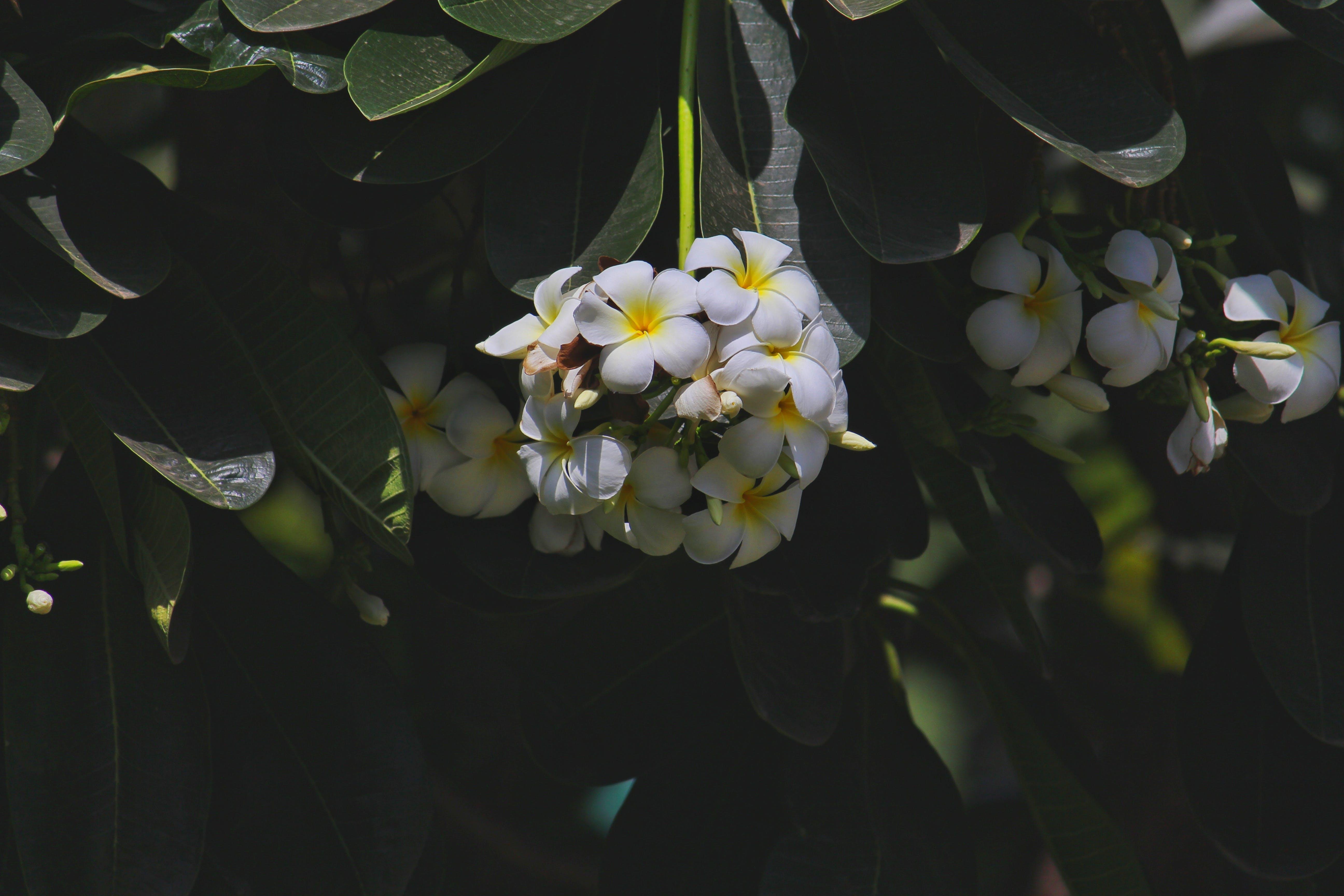 공원, 꽃, 꽃이 피는, 꽃잎의 무료 스톡 사진