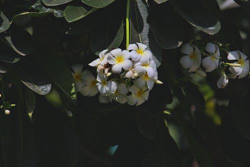 คลังภาพถ่ายฟรี ของ กลางวัน, กลางแจ้ง, กลีบดอก