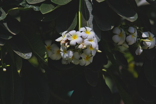 White and Yellow Flowers Photography