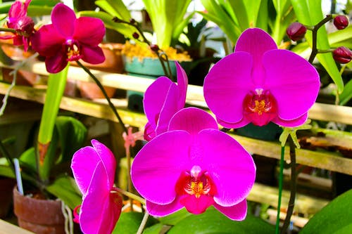 Základová fotografie zdarma na téma barva, barvy, botanický, exotický