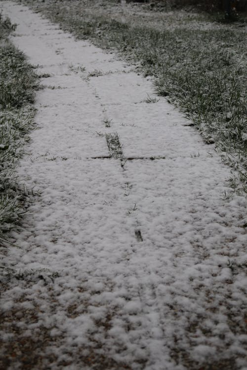 Free stock photo of path, snow