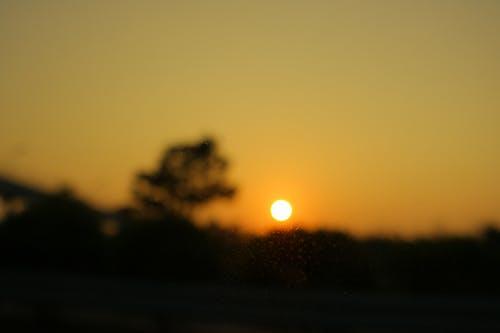 Gratis arkivbilde med hevnfarge, solnedgang, tre, uskarpt
