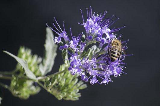 Honeybee Perched on Purple Petaled Flower Closeup Photography