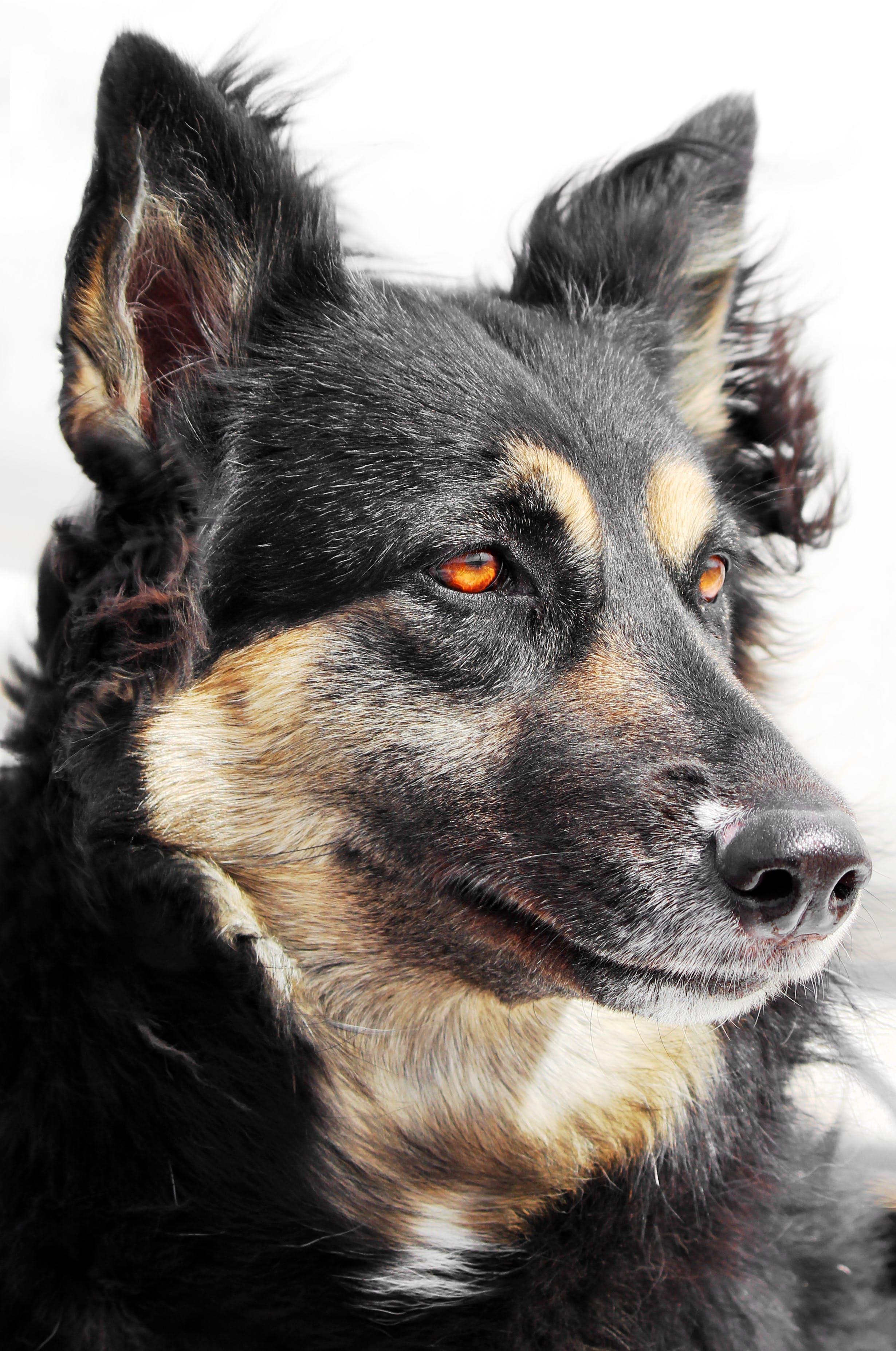 Free stock photo of animal, dog, ears, friend