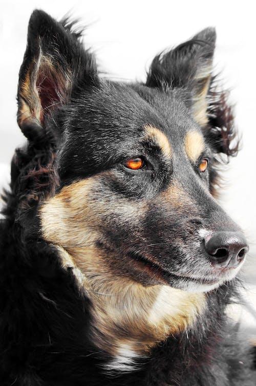 Foto d'estoc gratuïta de amic, animal, foto vertical, gos