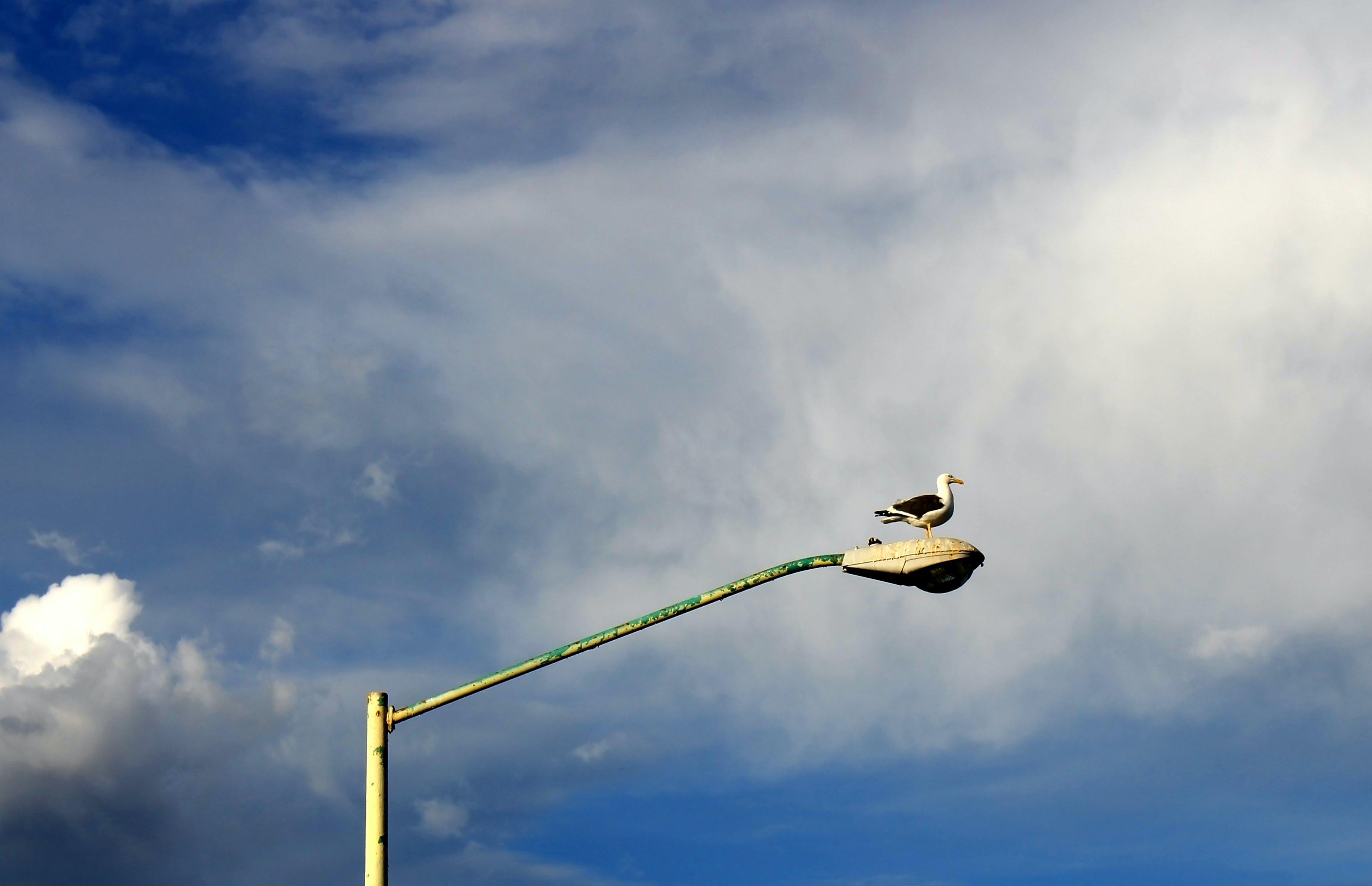 Free stock photo of blue, cloud, grey, light