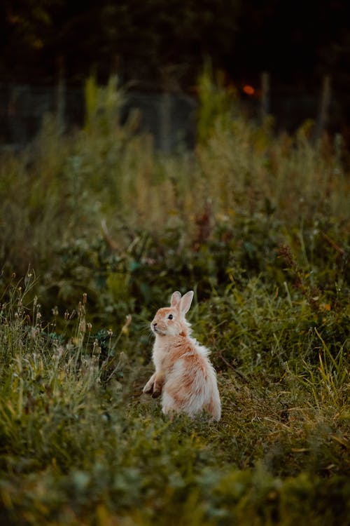 Adorable rabbit on grassy terrain