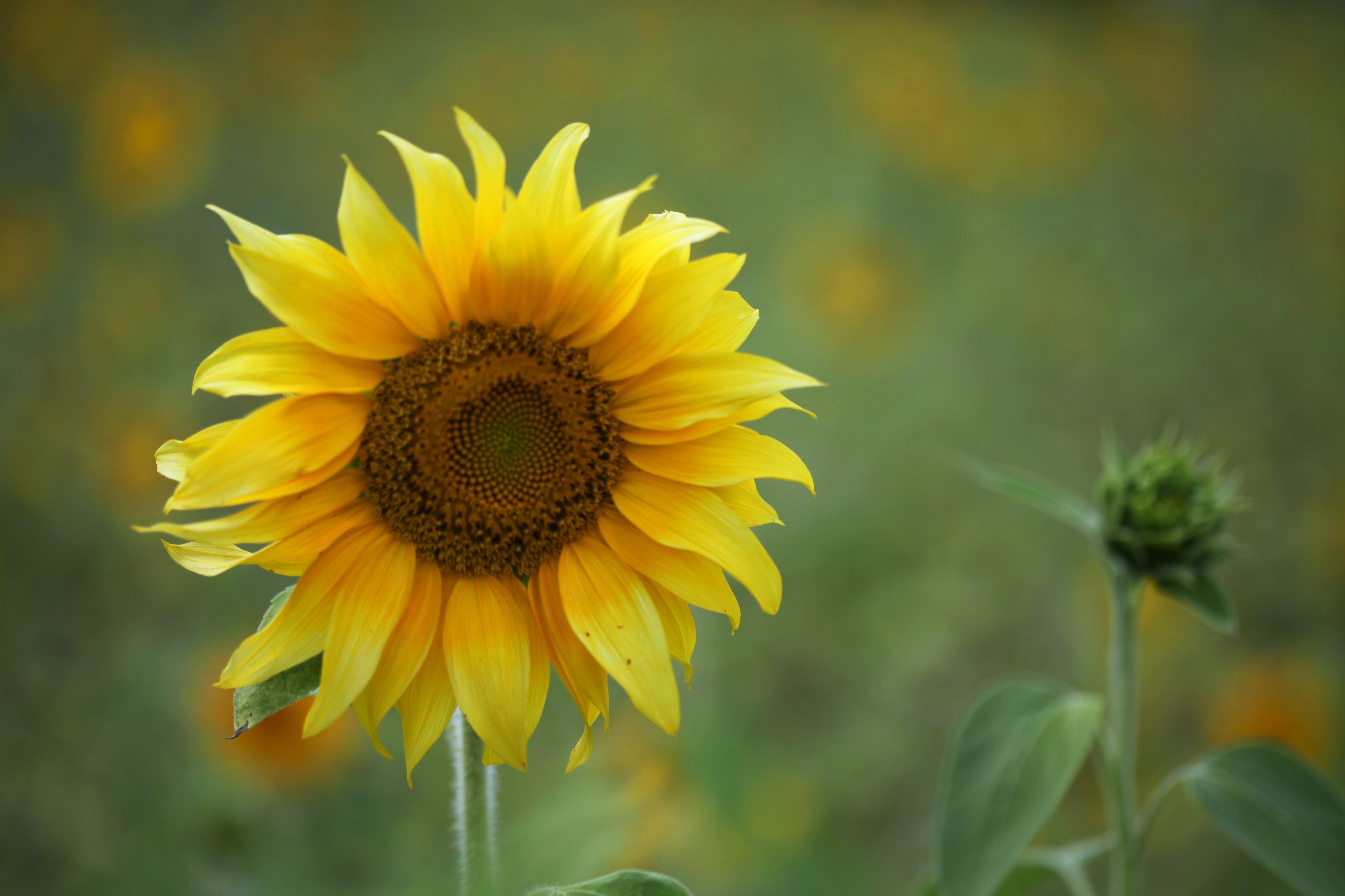 flora, floral, flower