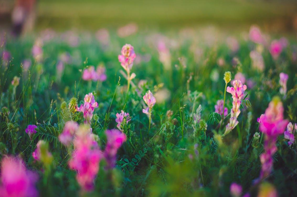 ดอกไม้, ธรรมชาติ, พฤกษา