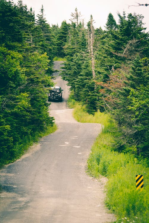 Vehicle on Road in Between Trees Photography