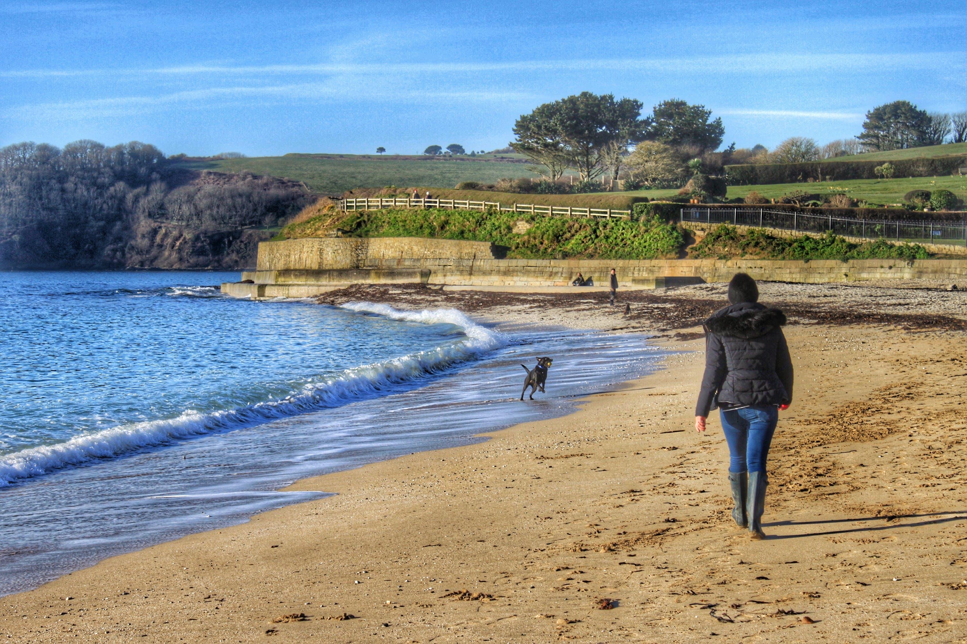 Free stock photo of beach, walking, ocean, dog