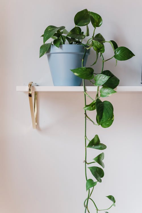 Potted green plant on white shelf