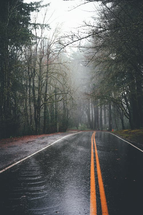 Empty wet asphalt road going through misty forest with tall lush and leafless trees against foggy sky on rainy day