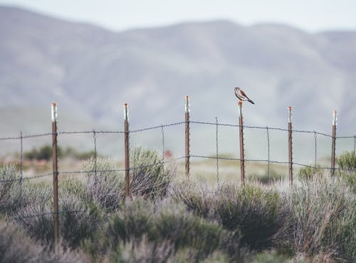 Bird sitting on wire fence in mountainous valley