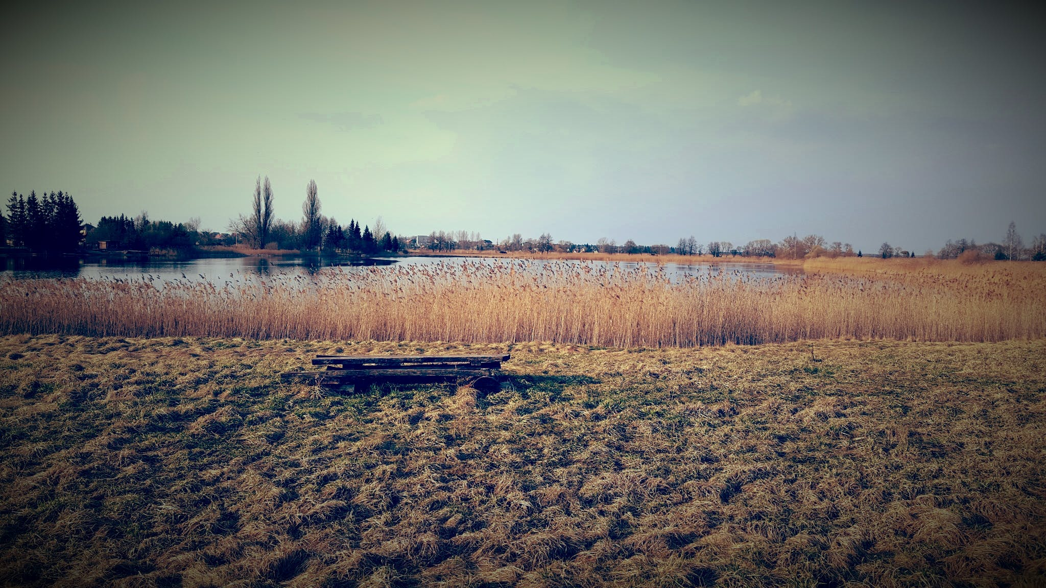 Brown Grass Field By The Lake