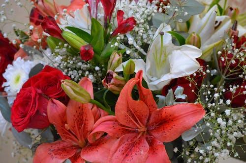 Gratis arkivbilde med blomster, vakre blomster