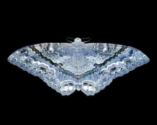 Ảnh lưu trữ miễn phí về bướm đêm