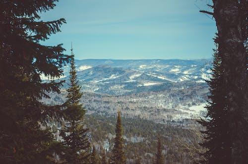 Foto d'estoc gratuïta de arbres, cel, muntanyes, natura