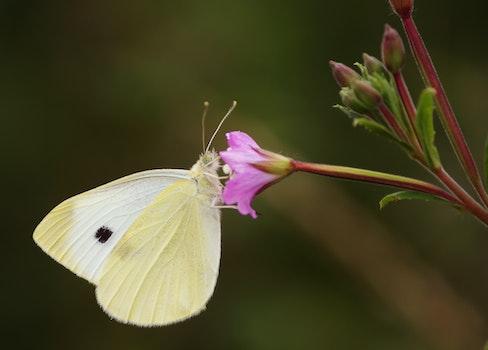 Free stock photo of yellow, animal, flower, pink