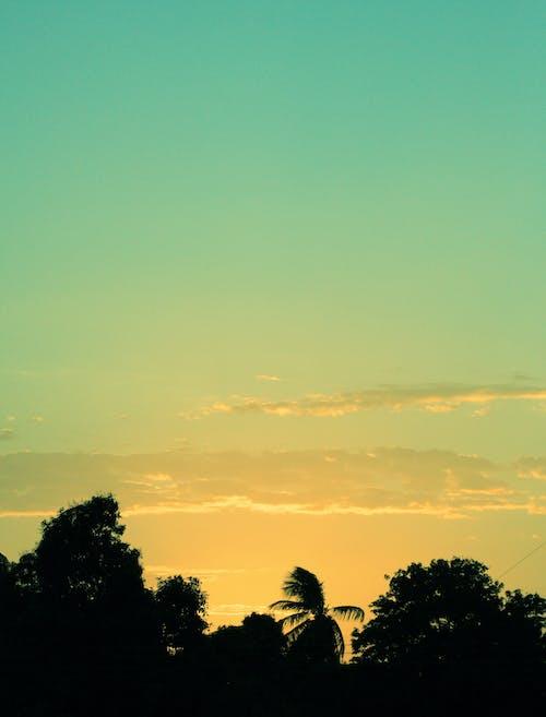 在日落樹的剪影