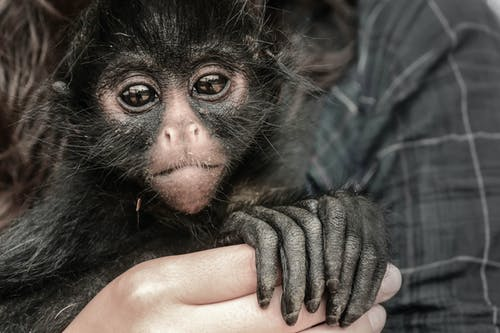 Person Holding Monkey