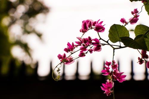 Základová fotografie zdarma na téma flóra, hloubka ostrosti, kvést, květ